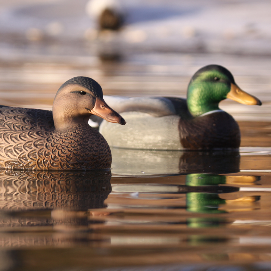 Avery GHG Over-Size Mallard Decoys (Pk/6) thumbnail